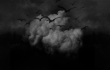Dark Sky Paradise Cover